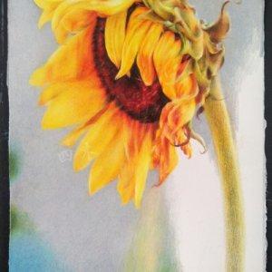 彩铅向日葵步骤图