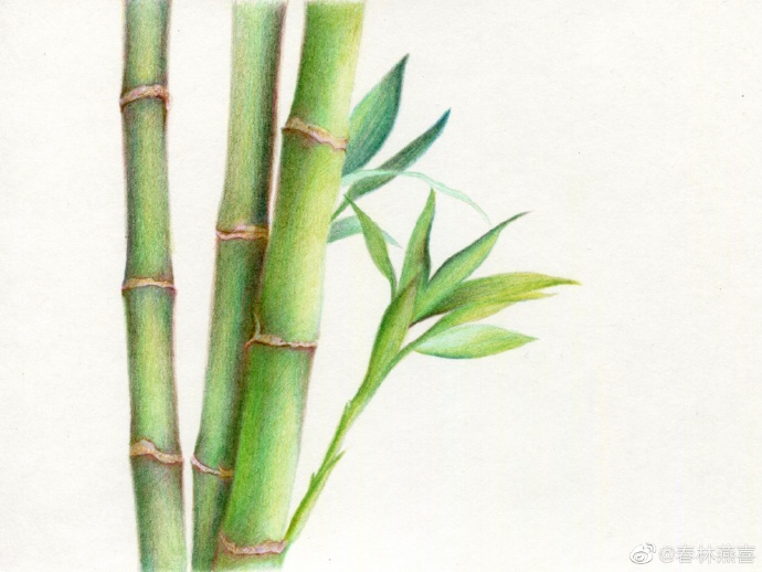 彩铅竹子完成