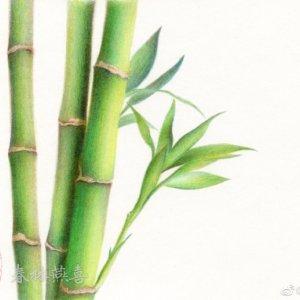 彩铅教程|竹子彩铅教程过程图
