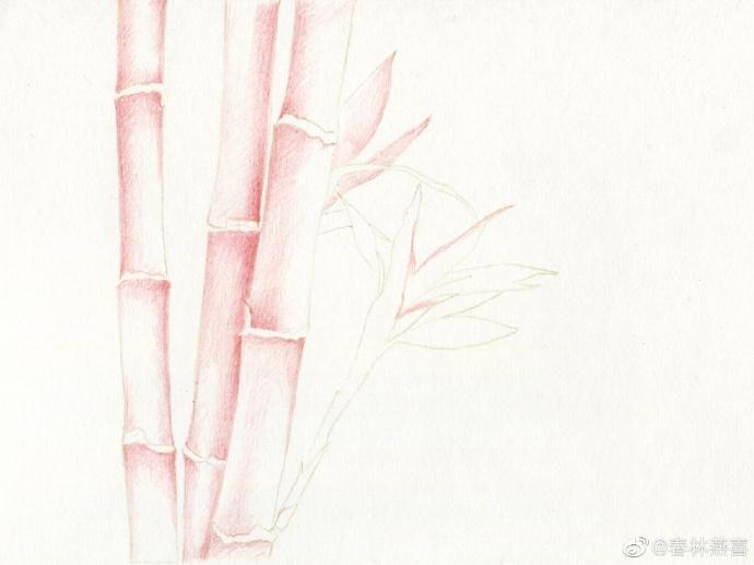 竹子起稿线图