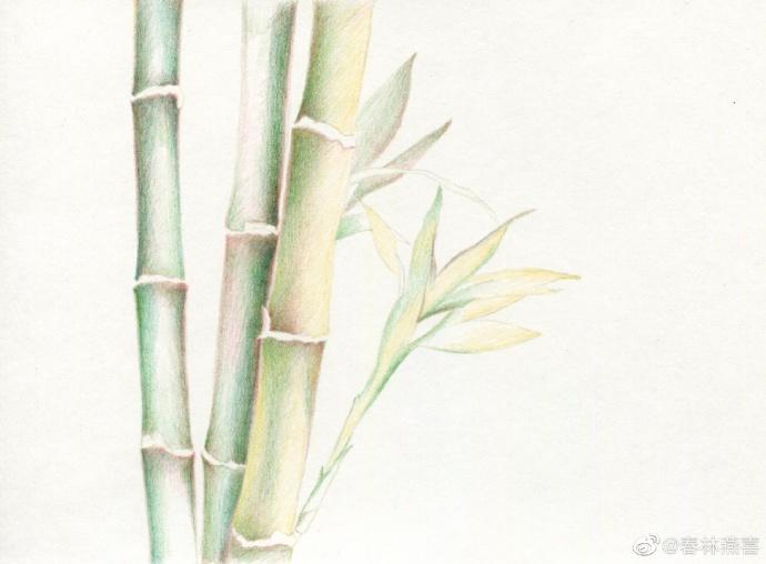 竹子打底色