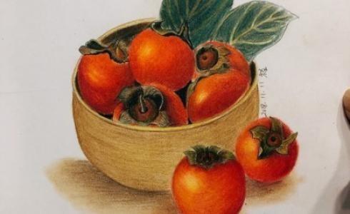 秋天的果实彩铅柿子